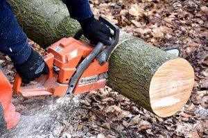 consulting arborist cutting a tree