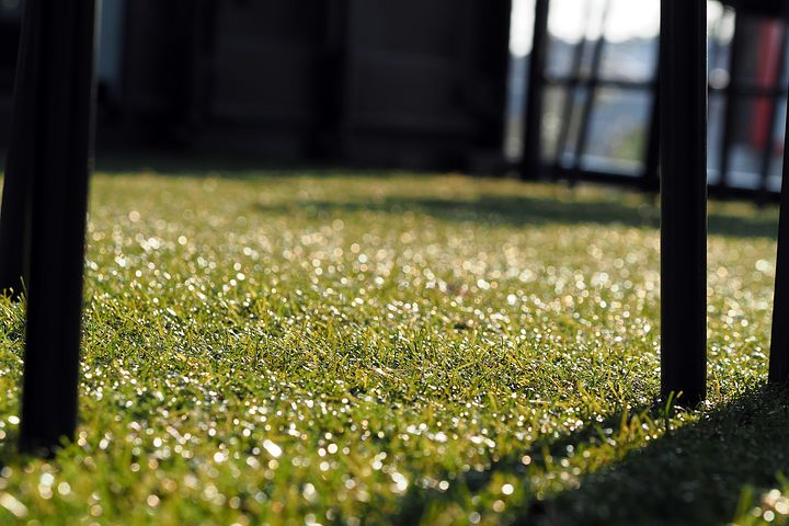 artificial lawn in Adelaide
